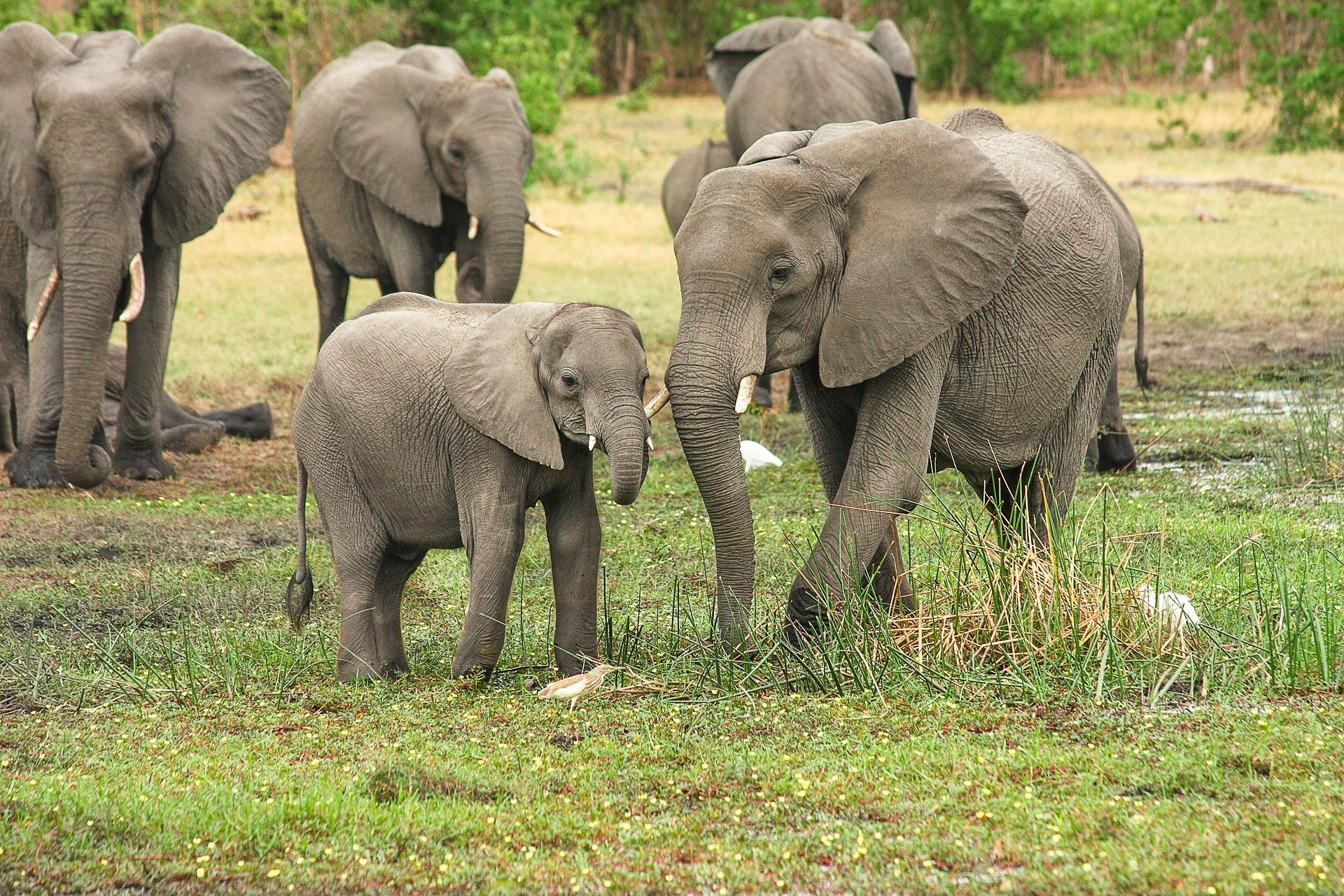 Pulsatilla E Altro Ancora Per Elefanti Lesperienza Di Un Medico