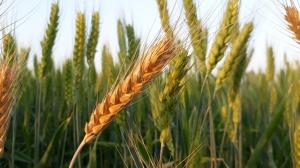 Agro-omeopatia