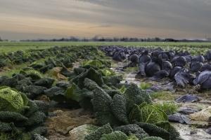 Che cos'è l'Agro-Omeopatia? Facciamo chiarezza