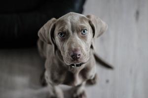 Epilessia in un cane. Un caso clinico omeopatico veterinario