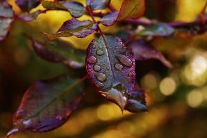 Gocce d'acqua sulle foglie