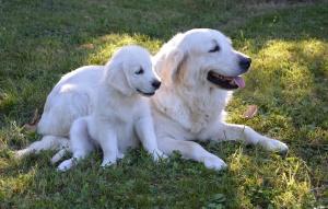 La paura dei botti. Un problema comportamentale del cane trattato con l'Omeopatia