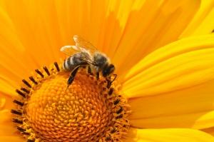 Omeopati veterinari e antimicrobici in apicoltura