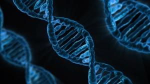 Omeopatia, le ricerche anti-cancro