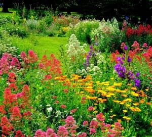 Omeopatia per le piante: intervista a V.D. Kaviraj (seconda parte)