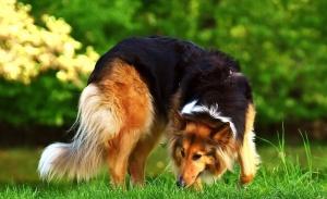 Patologie comportamentali del cane in Omeopatia. Linee guida e 4 casi clinici