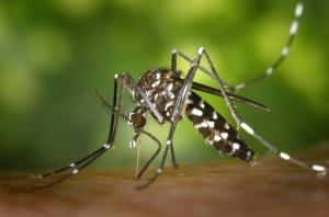Punture di zanzare e rimedi omeopatici